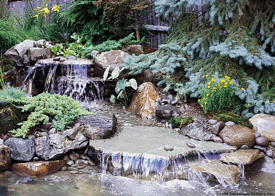 Pond ideas for Goldfish pond ideas